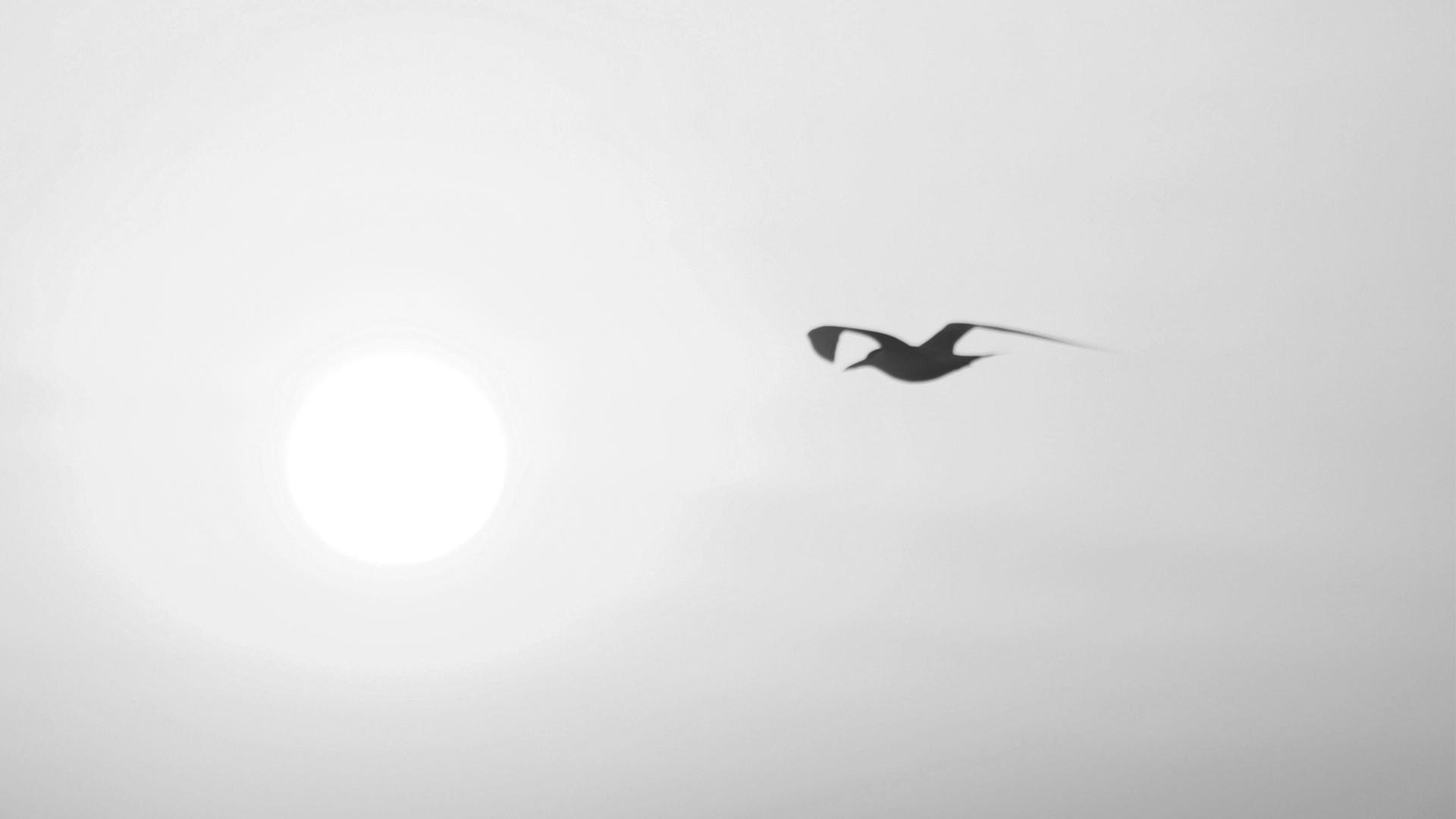 vogel-zwart-wit
